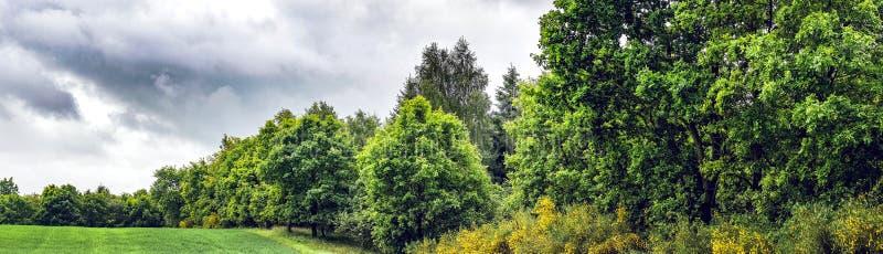 与绿色树的多云全景风景 库存图片