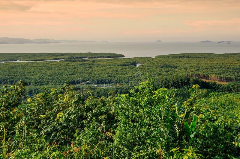 与绿色树的山景 库存照片