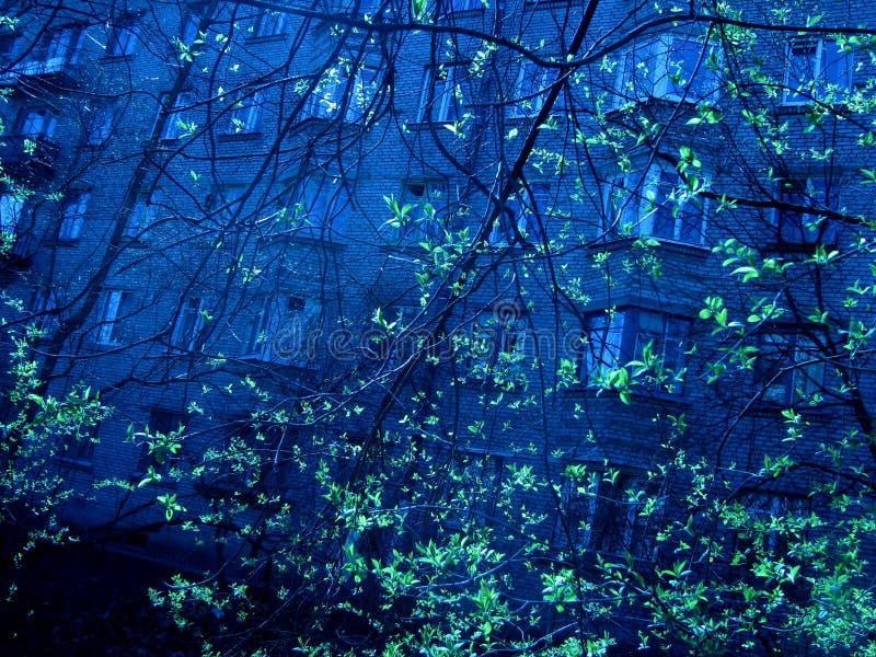 与绿色树nd大厦墙壁的深刻的蓝色都市看法 库存照片