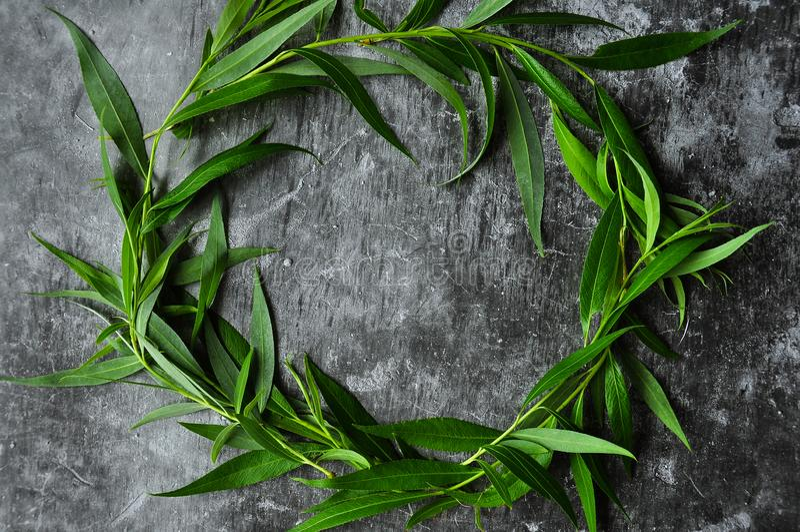 与绿色框架的花圈在灰色背景 杨柳和绿色叶子分支  灰色阴沉的水泥地板 库存照片