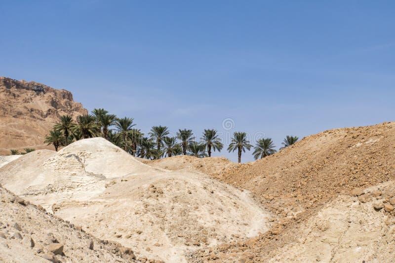 与绿色棕榈树通过沙子和岩石的绿洲在沙漠 发现绿洲的概念在沙漠 旅途的结尾, 免版税库存照片