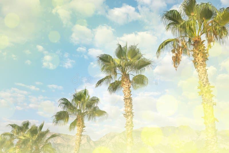 与绿色棕榈的热带风景和山和多云天空在夏日 图库摄影