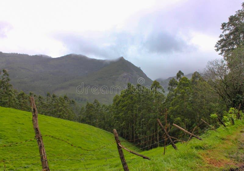 与绿色森林的山 库存图片