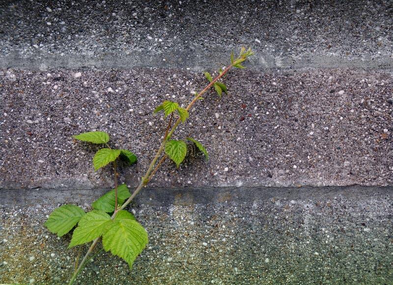 与绿色植物的墙壁背景 图库摄影