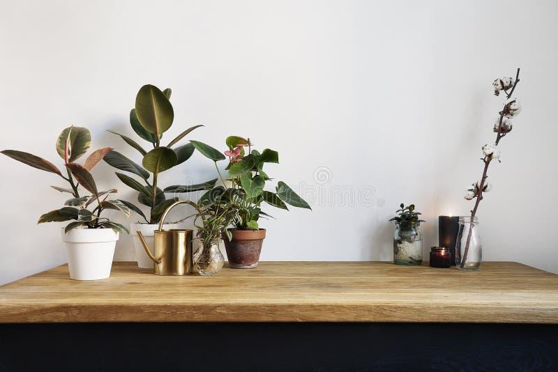 与绿色植物的白色厨房内部在土气木桌,北欧样式的现代工作场所上 免版税库存照片