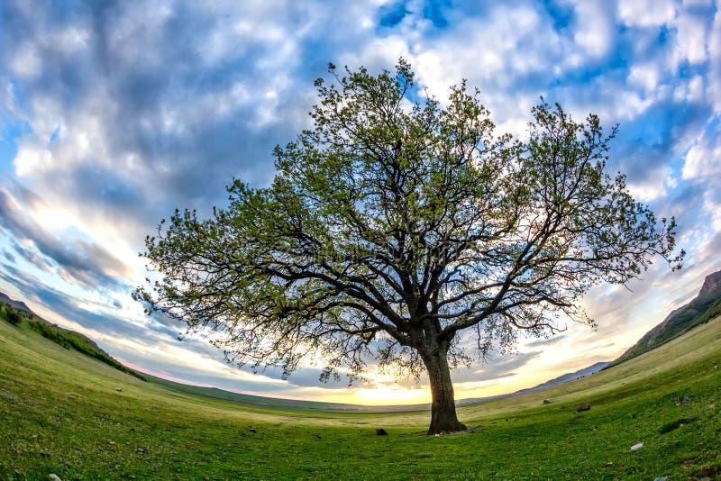 与绿色植被、一棵偏僻的大树和蓝色日落天空的美好的风景与云彩 库存图片