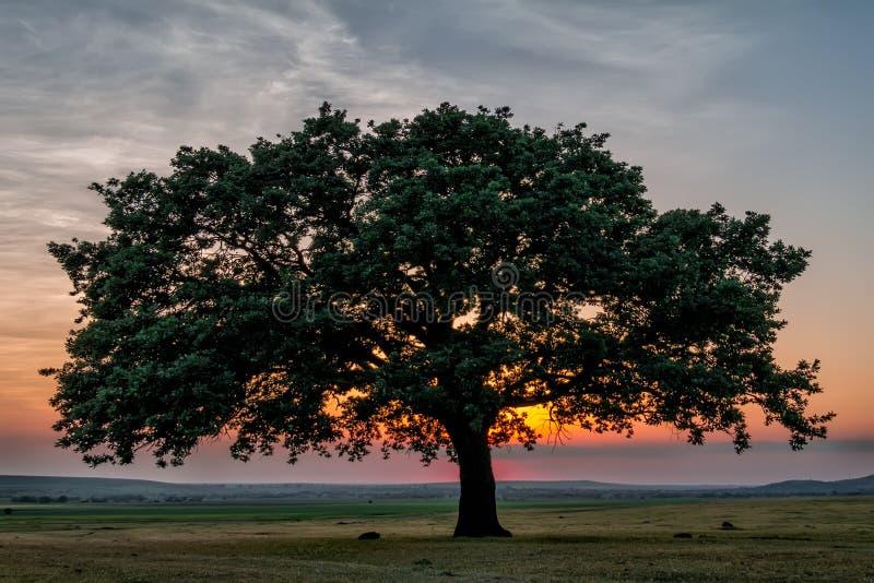与绿色植被、一棵偏僻的大树和蓝色日落天空的美好的风景与云彩 免版税库存照片