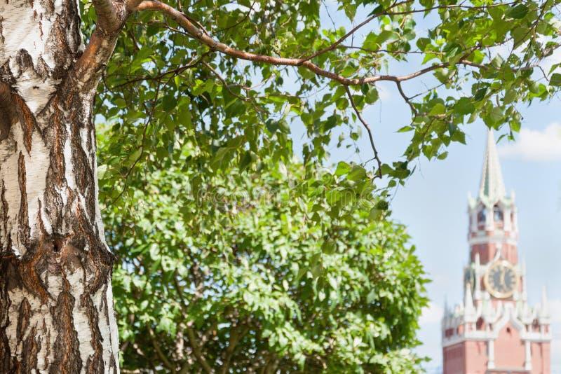 与绿色的桦树在前景离开,在克里姆林宫的Spasskaya塔的背景中在夏天 库存图片