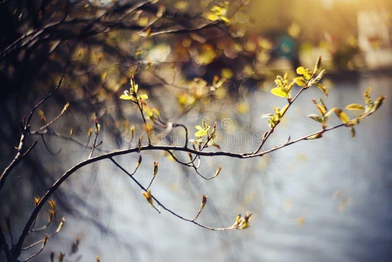 与绿色的背景在淡紫色灌木分支逃脱 图库摄影