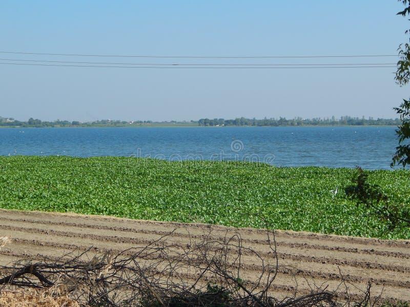 与绿色花叶子的湖视图 免版税图库摄影