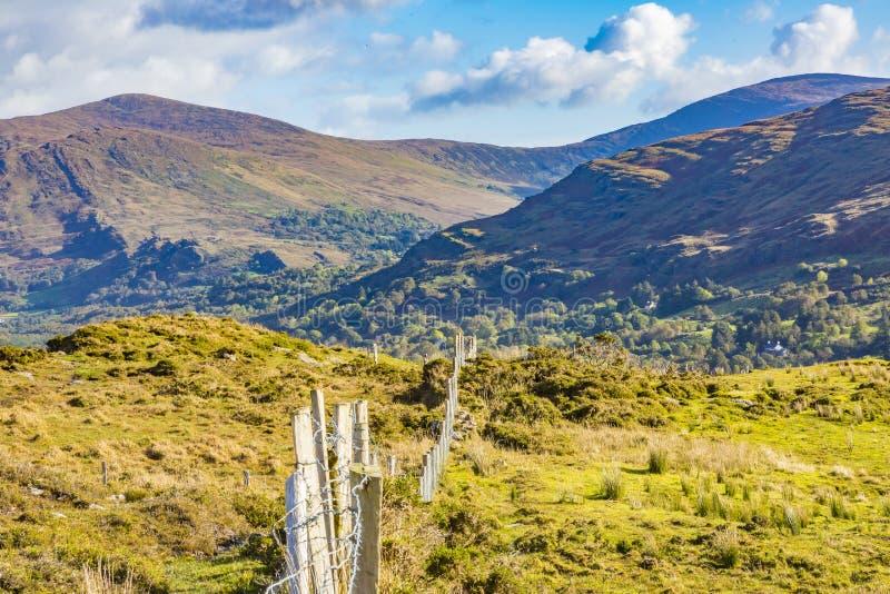 与绿色草甸的典型的爱尔兰风景 图库摄影