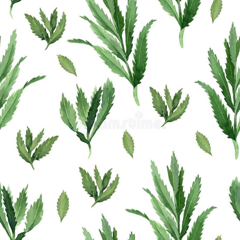 与绿色薄荷叶的水彩无缝的样式在白色背景 皇族释放例证