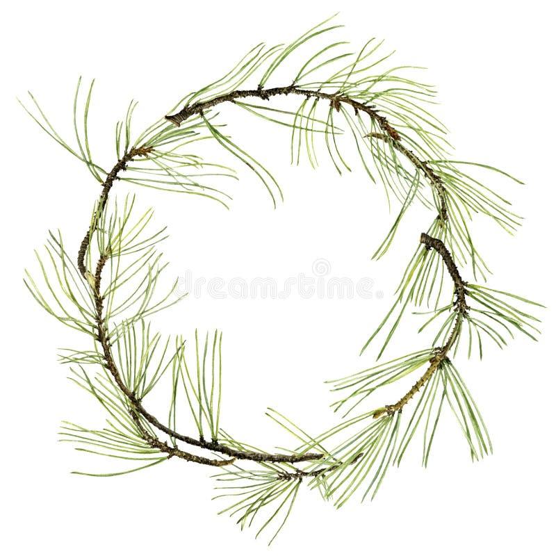 与绿色针的杉木分支 库存例证