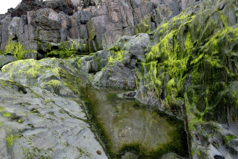 与绿色青苔的岩石 图库摄影