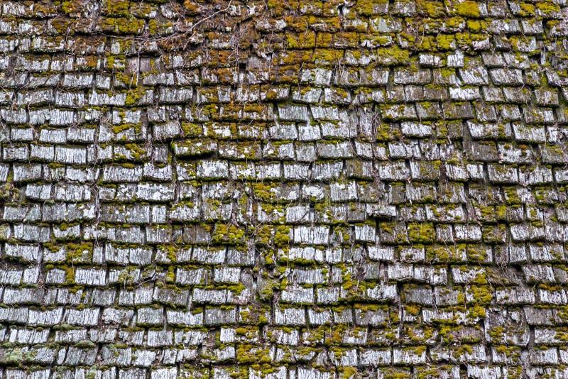 与绿色青苔的老木屋顶表面对此背景纹理 免版税库存图片