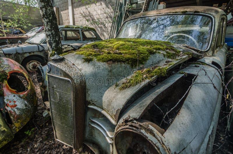 与绿色青苔的老默西迪丝 免版税库存照片