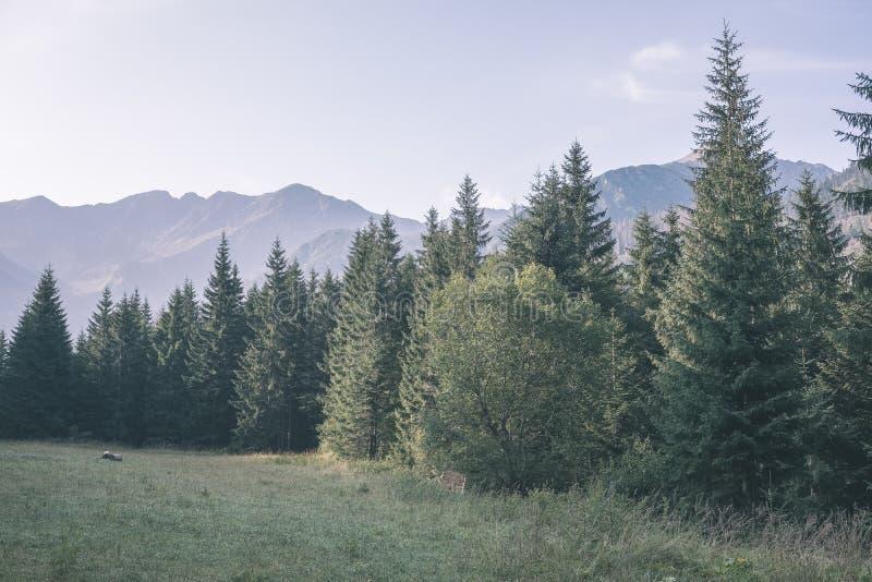 与绿色领域和森林的西部喀尔巴阡山脉的太脱拉山地平线前景的 在斯洛伐克的供徒步旅行的小道的夏天-葡萄酒 图库摄影