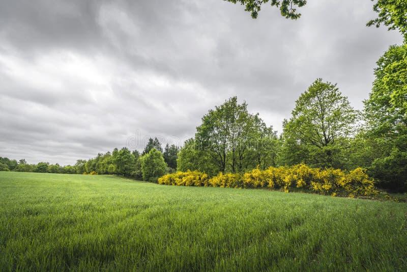 与绿色领域和黄色笤帚灌木的风景 库存照片