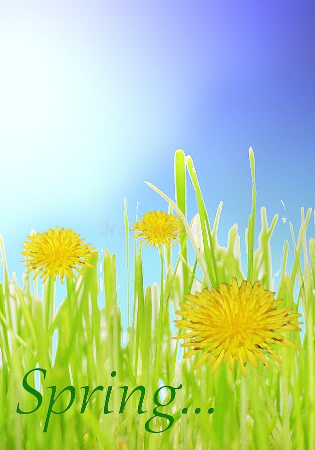 与绿草和黄色蒲公英花的抽象春天背景 库存照片