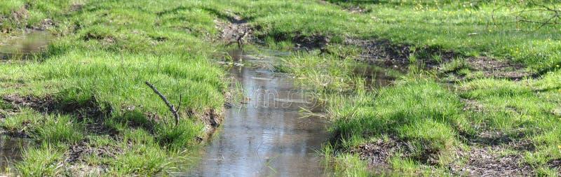 与绿草的沼泽 图库摄影