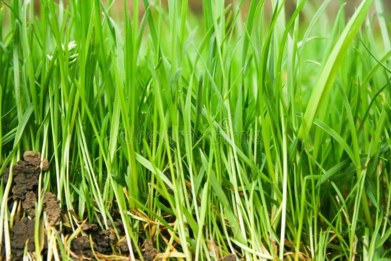 与绿草的自然本底 库存照片