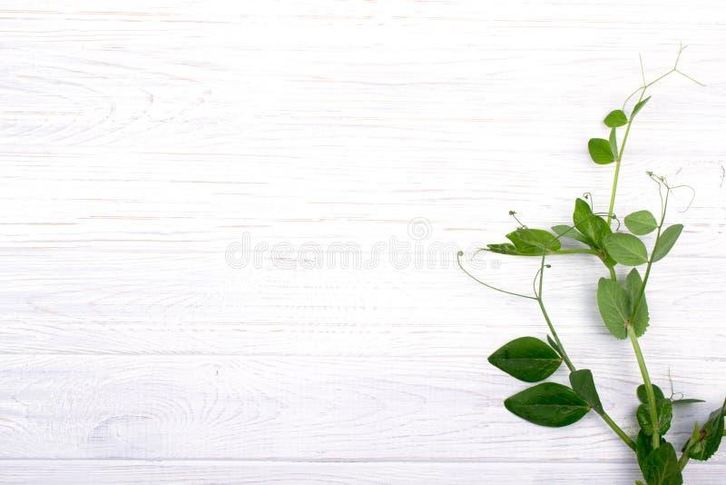 与绿豆分支的Minimalistic构成在白色木桌上的 免版税库存图片