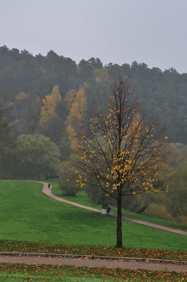 与缺乏黄色叶子的孤零零树 库存图片