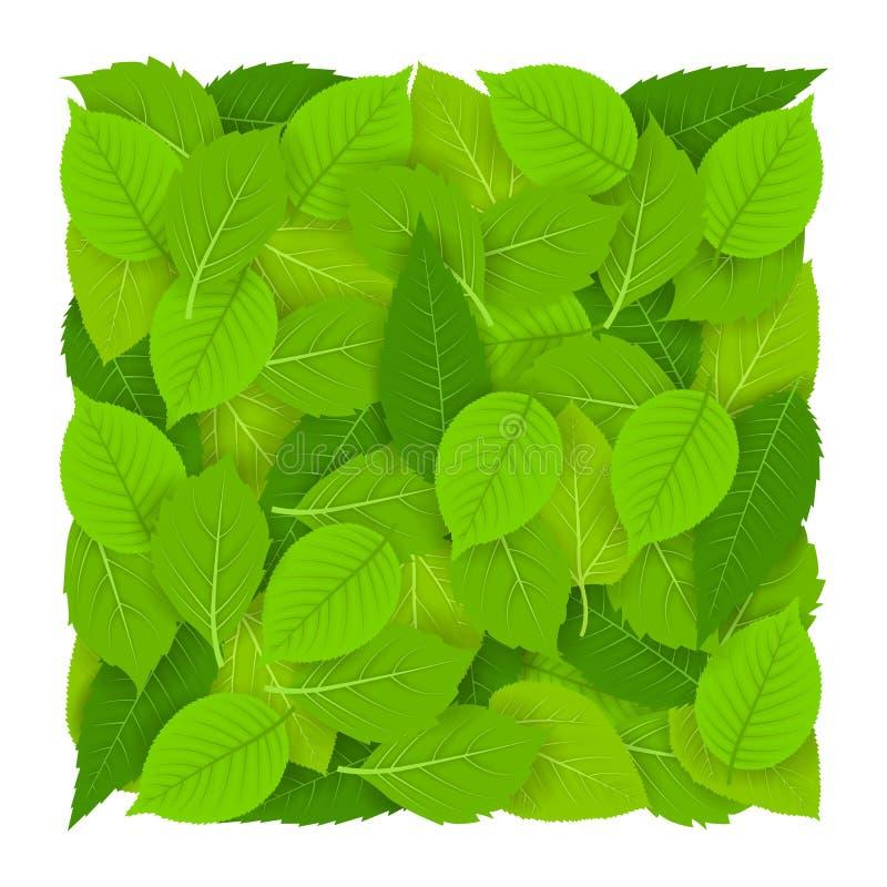 与美丽的新鲜的绿色叶子的方形的样式 背景查出的白色 向量例证