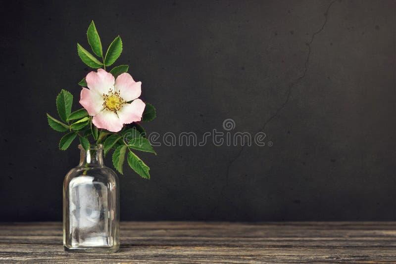与美丽的玫瑰的静物画在黑暗的难看的东西背景的花瓶与拷贝空间 免版税图库摄影