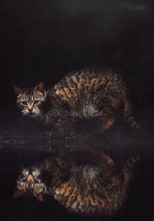 与美丽的眼睛的美丽的猫画象 库存照片