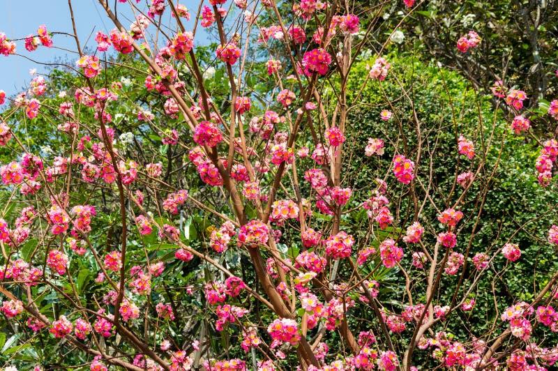 与美丽的红色花的灌木 免版税库存图片
