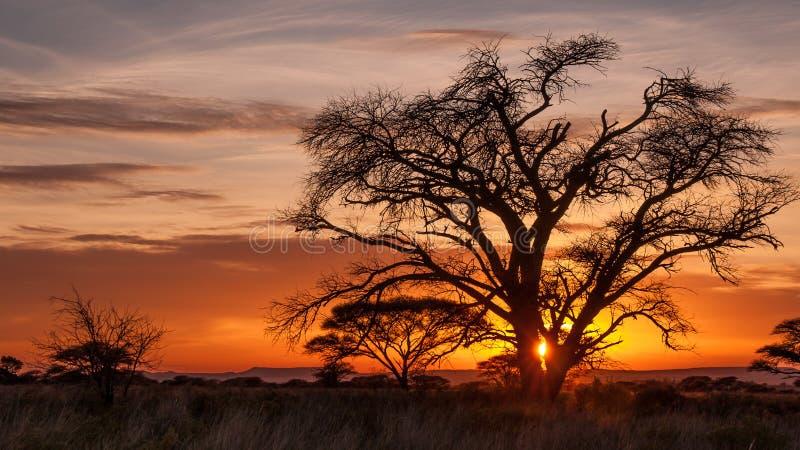 与美丽的老树的剧烈的日出 免版税库存照片