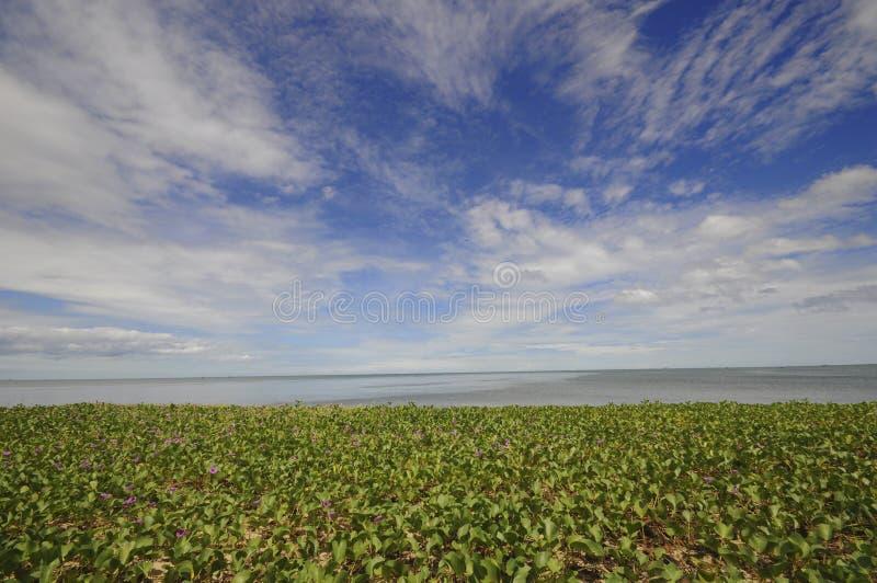 与美丽的蓝天的海滩牵牛花 免版税库存图片