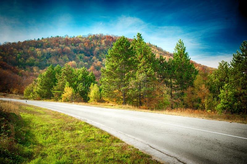 与美丽的路的风景通过有五颜六色的t的森林 免版税库存照片