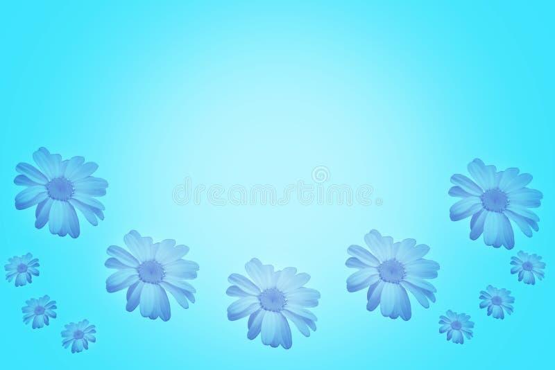 与美丽的雏菊的蓝色背景 库存图片