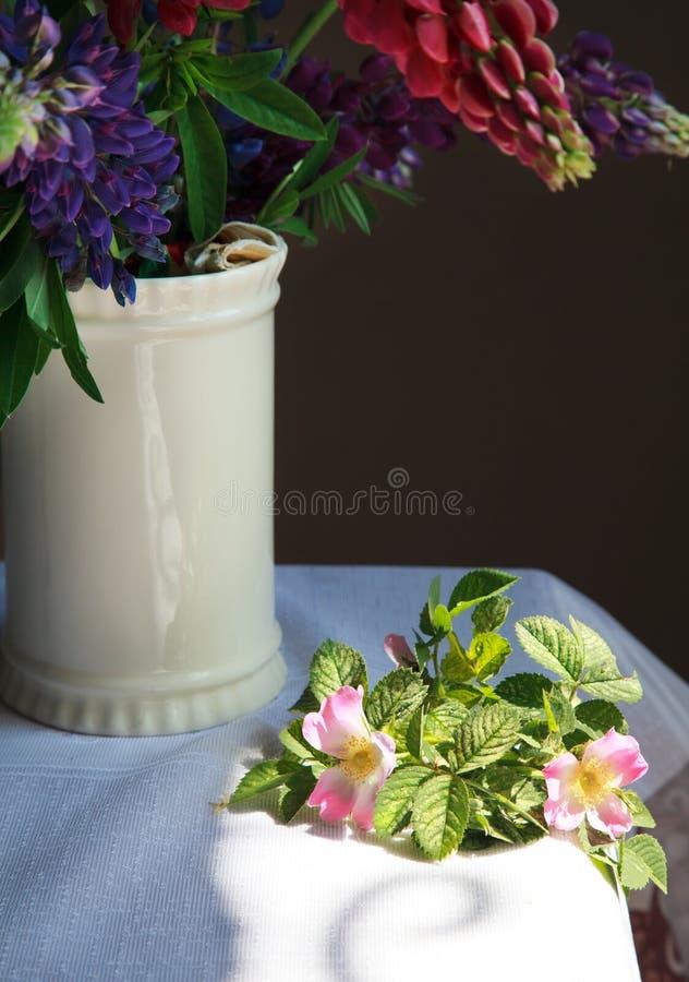与美丽的阴影的静物画桃红色花开花的dogrose 库存图片