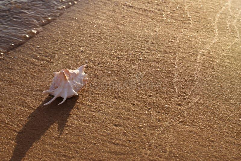 与美好的壳的沙滩在海附近在晴朗的夏日 免版税图库摄影
