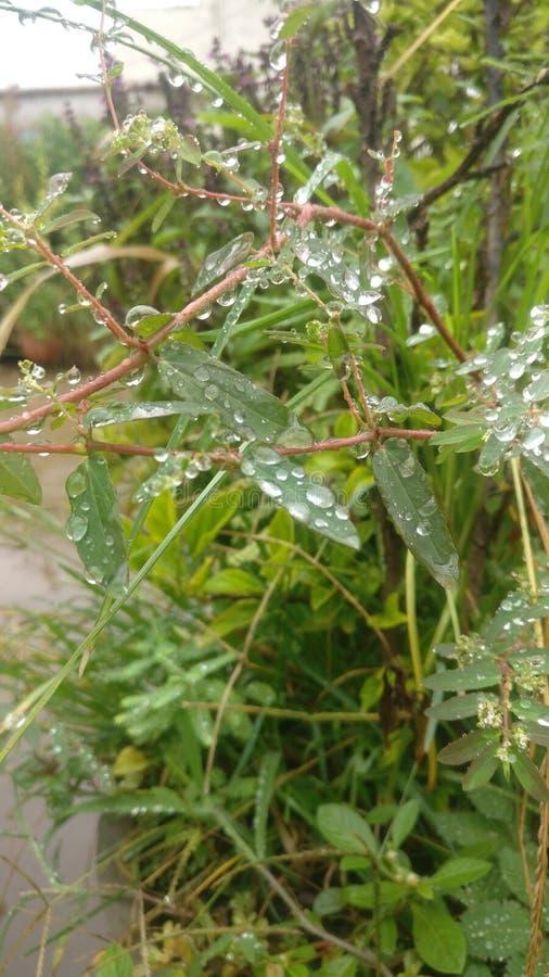 与美好的水滴的绿色事假 库存照片