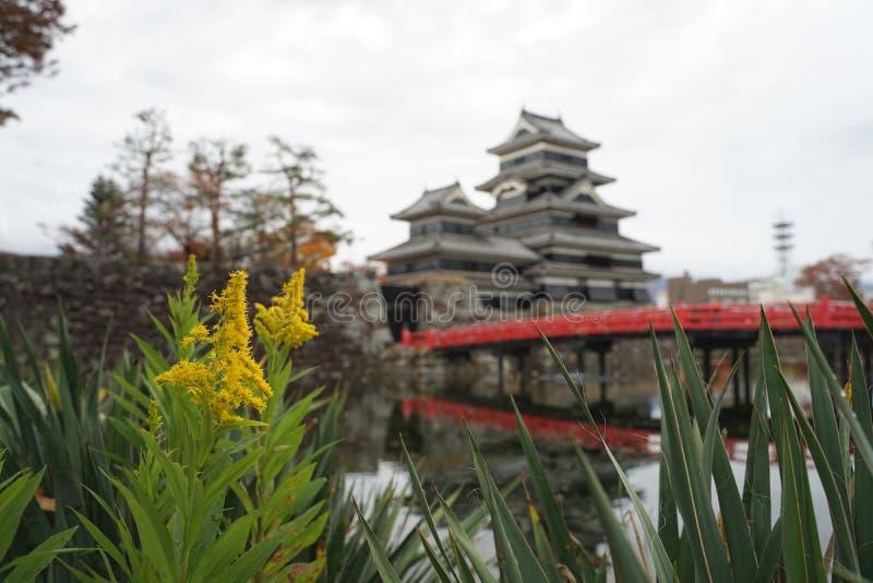 与美好的黑色古老日本加州的黄色花 库存图片