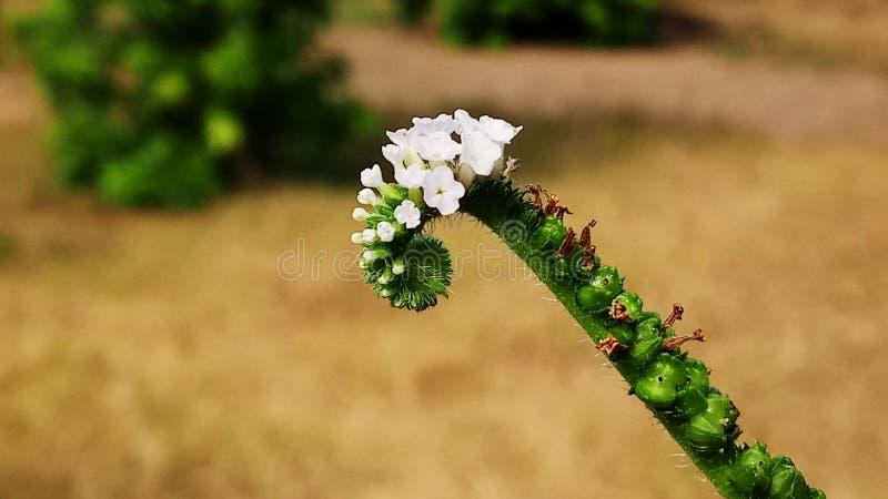 与美妙的颜色的这样一朵美丽的花 库存照片