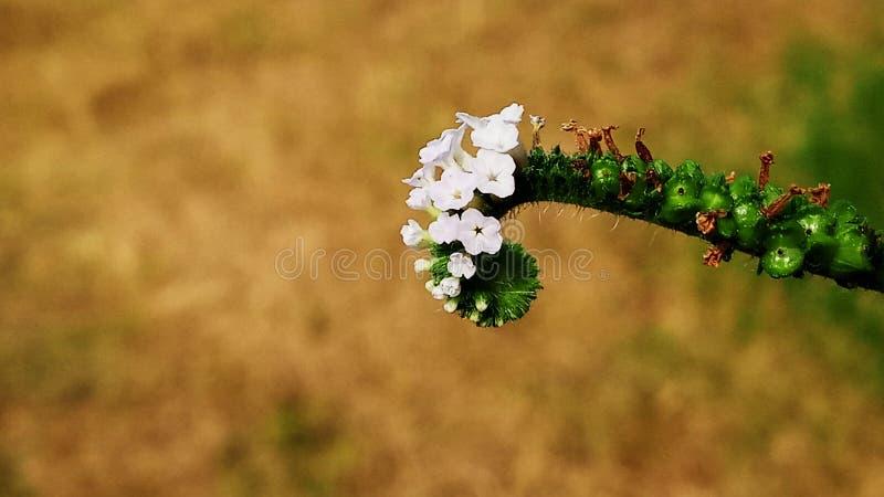 与美妙的颜色的这样一朵美丽的花 免版税图库摄影