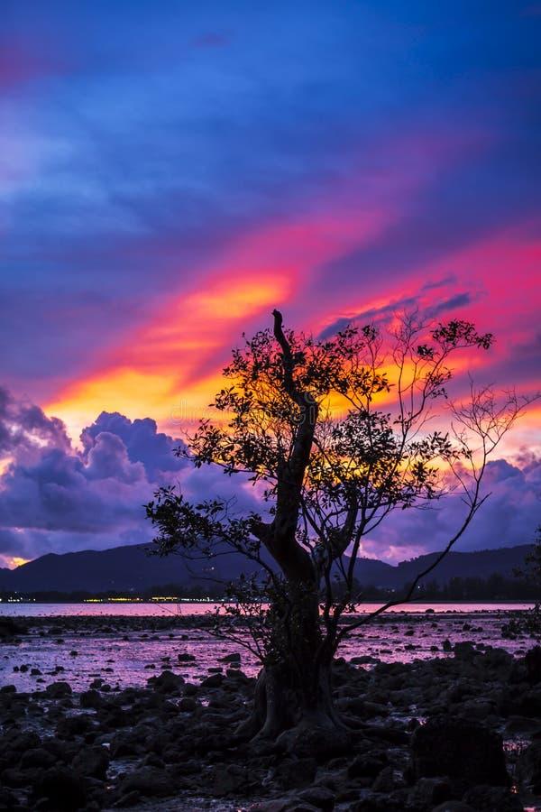 与美洲红树树的Firey日落 库存图片