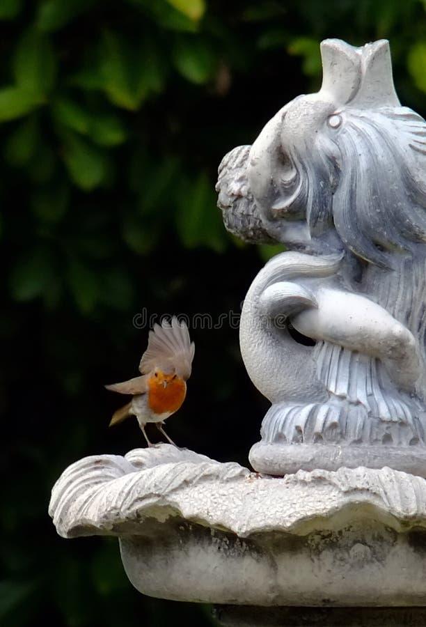 与翼的罗宾在登陆在庭院特点以后 库存照片