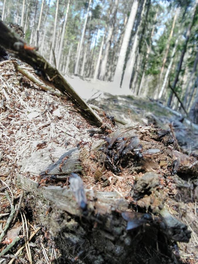 与翼的Goosebumps在森林里 免版税库存图片