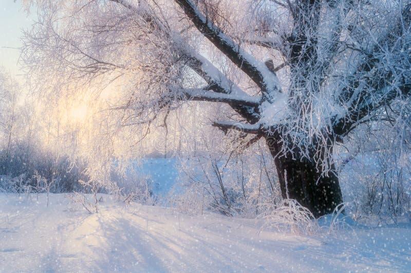 与老冷淡的冬天树的冬天风景在阳光下 库存图片
