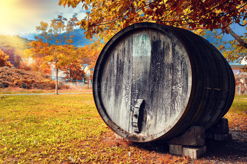 与老木葡萄酒桶的秋天风景 库存图片