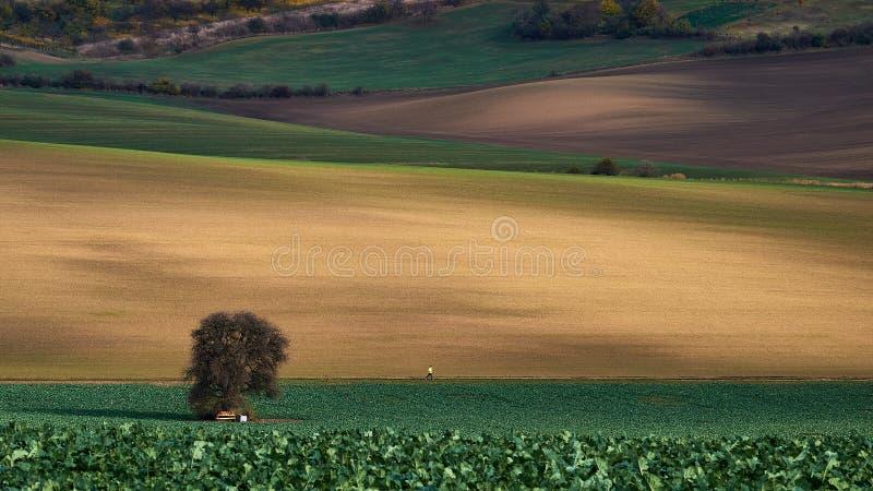 与老树、连续人和弯曲的领域的美好的五颜六色的秋天风景在南摩拉维亚 cesky捷克krumlov中世纪老共和国城镇视图 库存图片