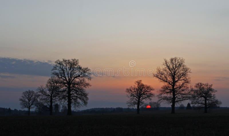 与老橡木的清早风景 免版税图库摄影