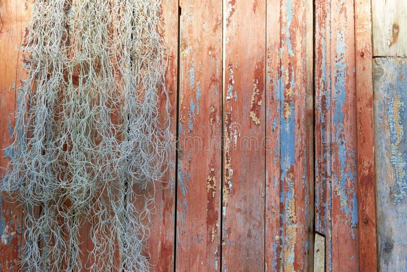 与老油漆小块片断的老木背景在木头的 有油漆的一棵老树的纹理,委员会和干燥植物 免版税库存照片