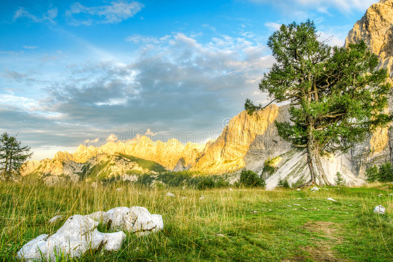 与老百灵树的美好的山风景在日落光 朱利安阿尔卑斯山,特里格拉夫峰国家公园 斯洛文尼亚 库存照片